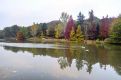Autumn trees around lake. Fall trees reflected in lake. Royalty Free Stock Images