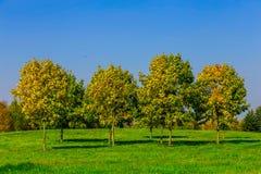 Autumn Trees auf einer Wiese Stockbilder