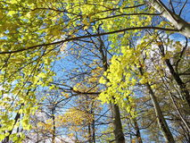 Autumn trees background Stock Images