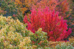 Autumn trees. Background - Fall in Ontario, Canada royalty free stock photography