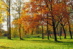 Autumn trees background Royalty Free Stock Image
