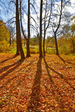 Autumn trees Backlit Royalty Free Stock Photo