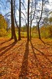 Autumn trees Backlit royalty free stock photo