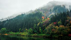 Autumn trees on banks with fog
