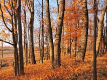 Autumn trees. Beautiful autumn trees in park, Lithuania royalty free stock photo