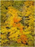 Autumn Trees Stock Image