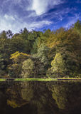 Autumn Trees-bezinning Royalty-vrije Stock Fotografie