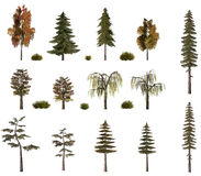 Autumn trees billboard collection on white. Autumn tree models collection birch oak pine fir trees texture isolated on white baclground Stock Photography