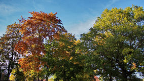 Autumn trees. And blue sky royalty free stock photo