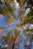 Autumn trees and blue sky Royalty Free Stock Photo