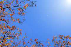 Autumn trees. On blue sky background Royalty Free Stock Images