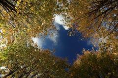 Autumn trees among blue sky Stock Image