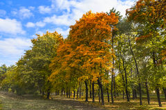 Autumn trees. Stock Image