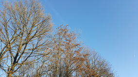 Autumn trees and blue sky Stock Images