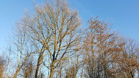 Autumn trees and blue sky Royalty Free Stock Photos