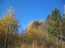 Autumn trees and blue sky Stock Photos