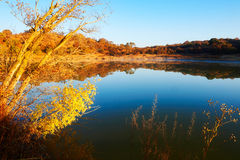 The autumn trees and blue water sunrise Royalty Free Stock Photography