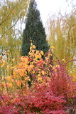 Autumn trees. Can be riotous with colour to describe, eyeful looked beautiful. Intoxicated for a long time refused to leave. This is the best gift given to Stock Photography
