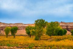 Autumn Trees in the Canyon Utah Fall Landscape Stock Image