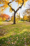 Autumn trees in Central Park with the Obelisk in the background. New York City, USA stock image