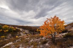 Autumn trees on chalky hills Royalty Free Stock Photo