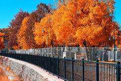 Autumn. Trees changing colors during fall season Stock Photos