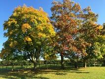 Autumn trees Royalty Free Stock Photography