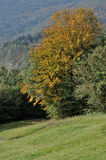 Autumn trees, cisa. Medow and colorful autumnal trees in woods on tuscan apennines near cisa Royalty Free Stock Images