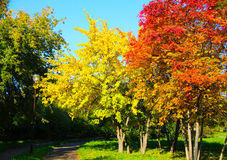 Autumn trees in city park. Stock Images
