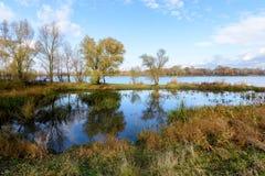 Autumn Trees Close ao rio de Dnieper imagem de stock
