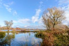 Autumn Trees Close ao rio de Dnieper fotos de stock