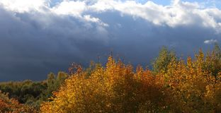 Autumn trees and clouds Royalty Free Stock Photos