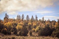 Autumn Trees. Colorful autumn trees against blue sky Stock Image