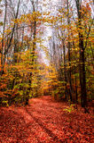 Autumn trees with colorful leaf Royalty Free Stock Photos
