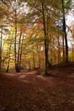 Autumn trees with colorful leaves stock images