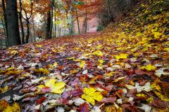 Colorful autumn forest with leaves on ground Stock Image