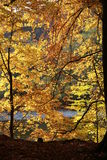 Autumn trees with colorful leaves royalty free stock photo