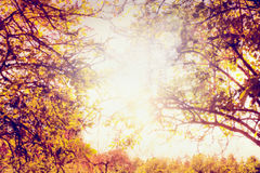 Autumn trees with colorful leaves and sun light, blurred nature background Royalty Free Stock Images
