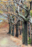 Autumn trees. Colorful autumn trees at the road Royalty Free Stock Images