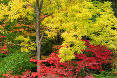 Autumn trees colors Stock Photo