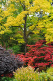 Autumn trees colors Stock Image