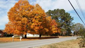 Autumn. Trees Stock Photo