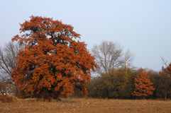 Autumn trees in countryside Royalty Free Stock Images