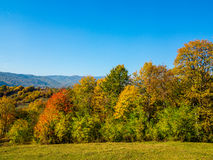 Autumn trees in countryside. Scenic view of autumn trees in countryside with blue sky background Stock Photo