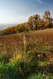 Autumn trees in countryside. Scenic view of autumn trees in countryside with grass field in foreground royalty free stock photography