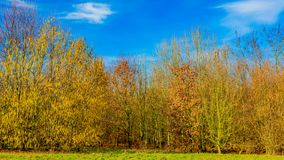 Autumn trees in the countryside on a wonderful sunny day. With a blue sky and sparse white clouds in Beek, south Limburg in the Netherlands Holland stock photo