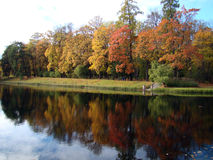 Autumn trees. Autumn creek with yellow trees in the park royalty free stock photos