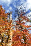 Autumn trees by day Royalty Free Stock Image