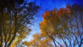 Autumn Trees. Delicately effected HD shot of trees, light wind blowing. Very dreamy feel. Source: Shot on HDV 1080 stock video