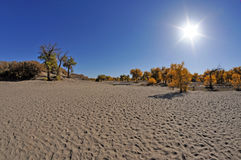 Autumn trees in desert Stock Photo